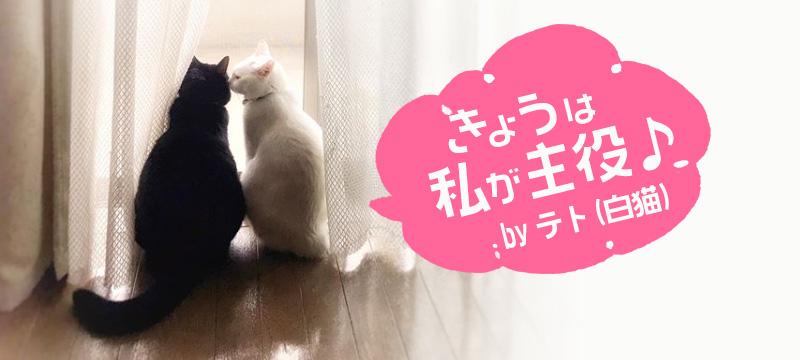 うちの白猫、テト【カメラマンちの宿命、いつも写真撮影されてます♪】