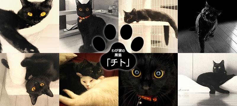 ウチの黒猫、チト【写真撮影映えするクールビューティ♪】