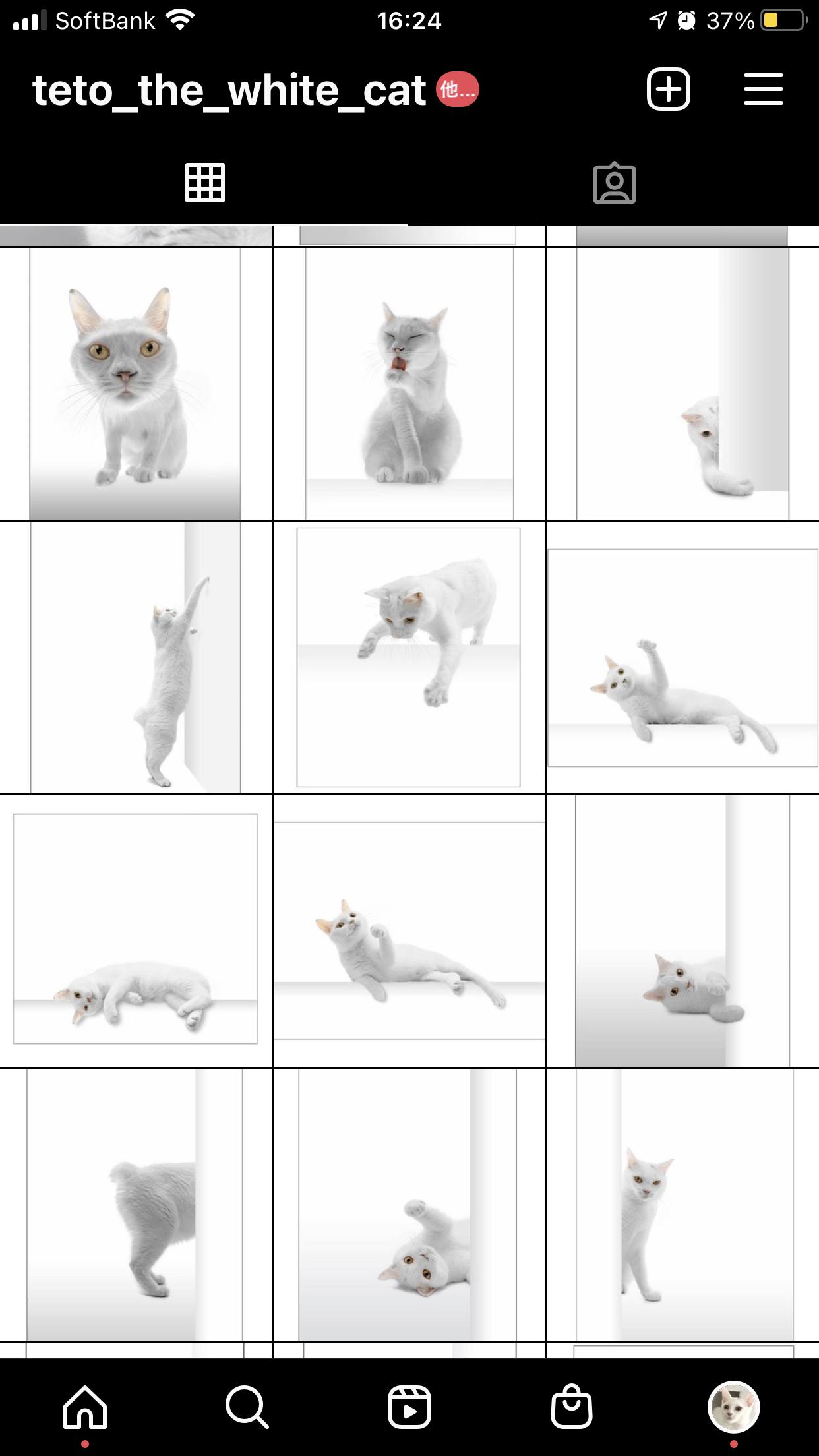 @teto_the_white_cat