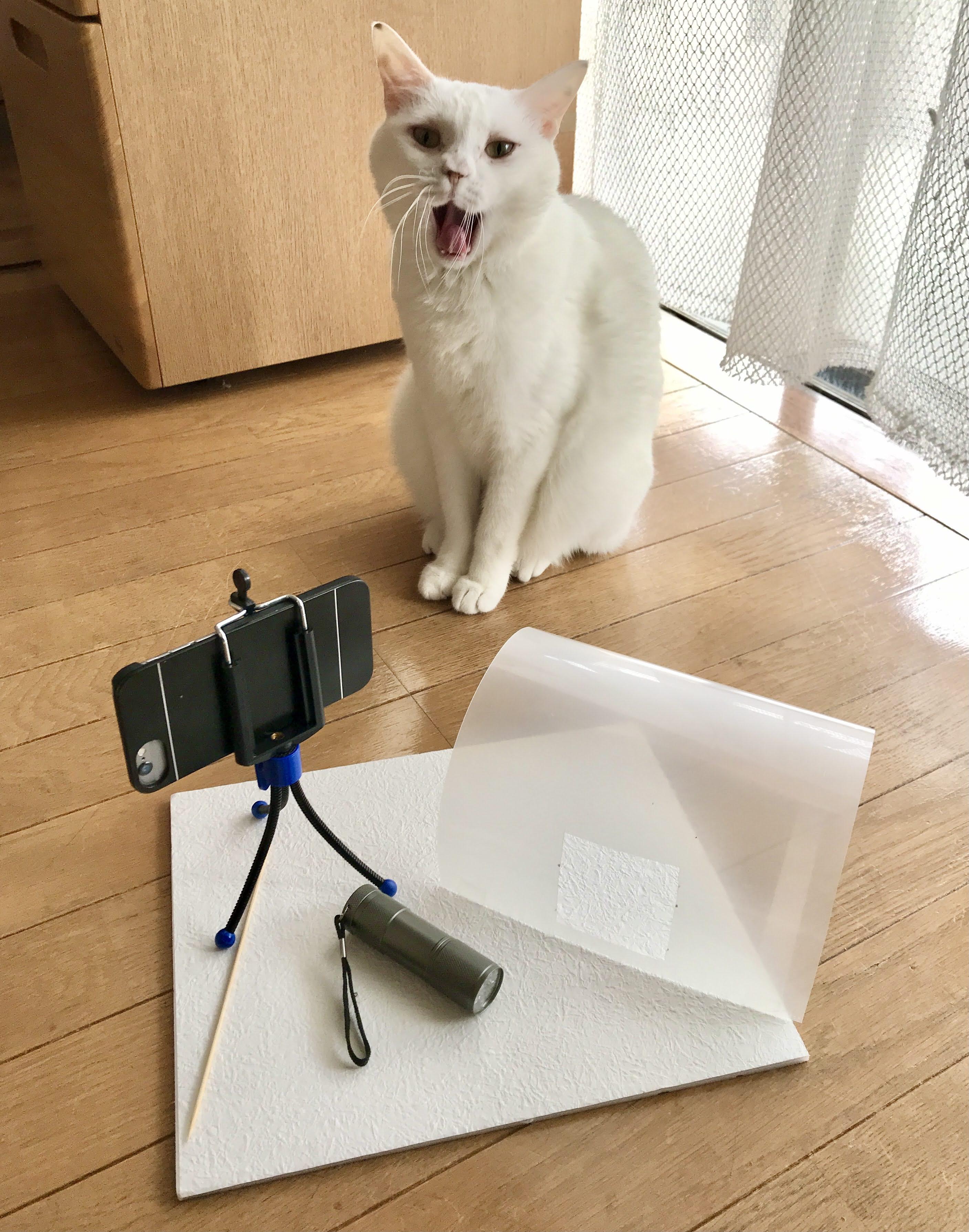 さあ、撮影しよう!