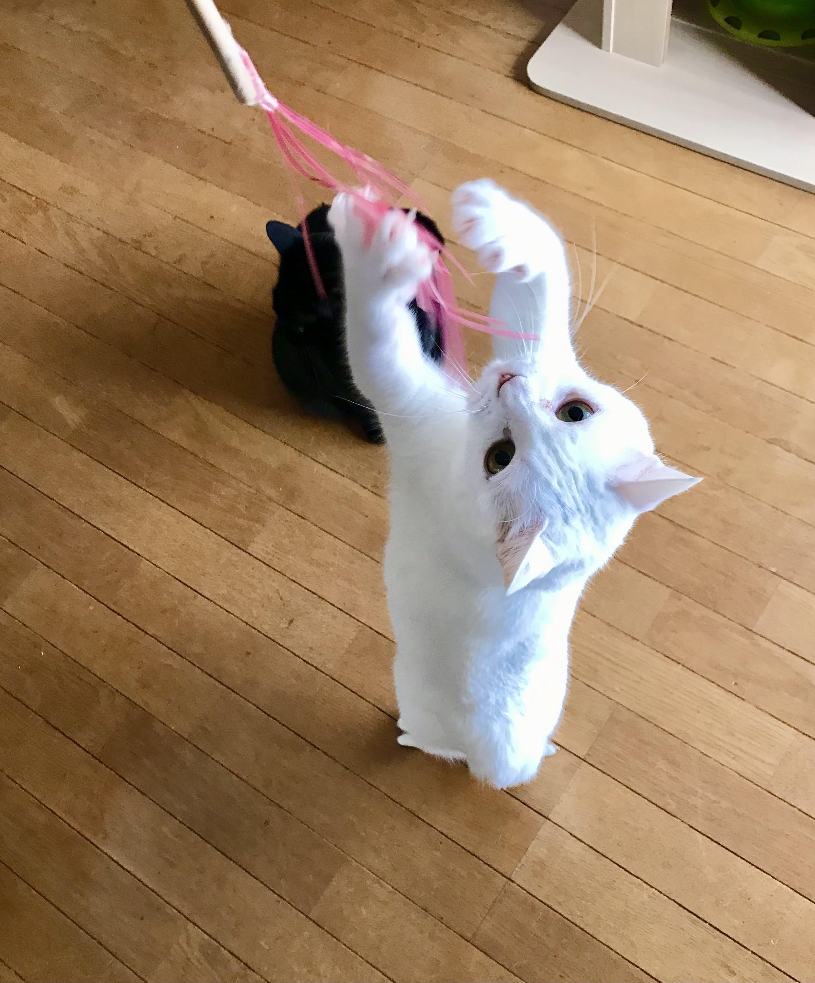 ピンクのクリアファイルでも作った猫じゃらし