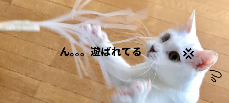 撮影でも大活躍!めっちゃ喰いつきのいい「猫じゃらし」を自作したので教えます!