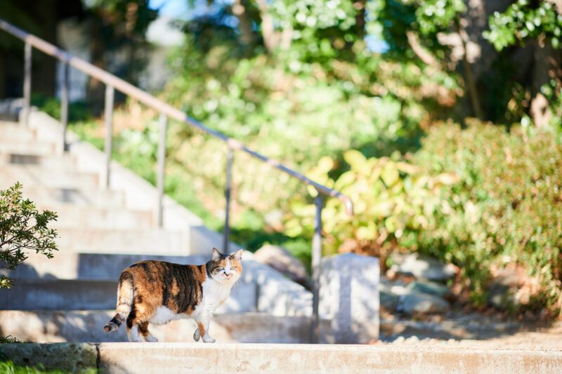 ゆっくり歩いている野良猫ちゃん